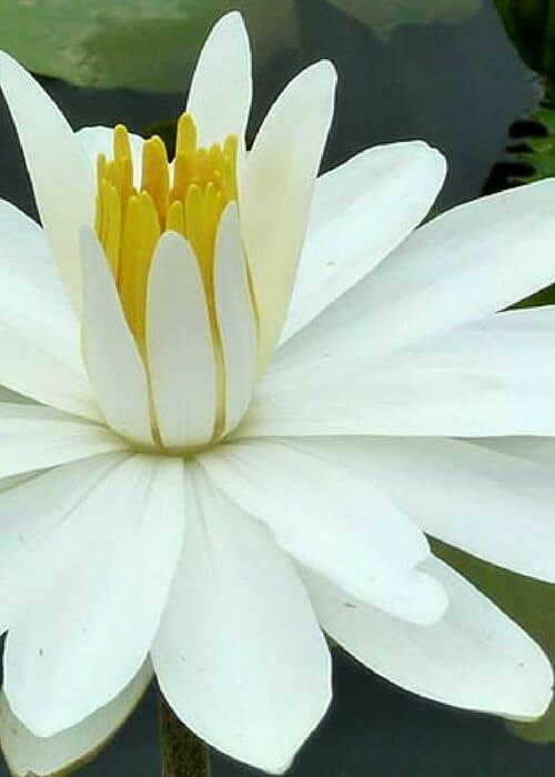 My First Ayurvedic Cleanse | Madhuri Method